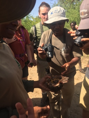 Our guides show us honeycomb from a tree.
